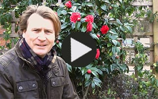 David Domoney presents video tutorials and how to gardening clips