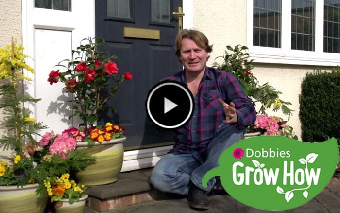 David Domoney presents Grow How videos with Dobbies
