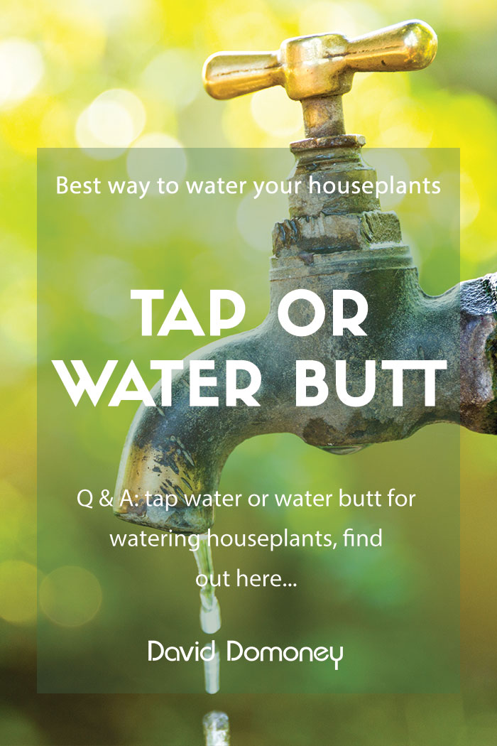 tap or water butt