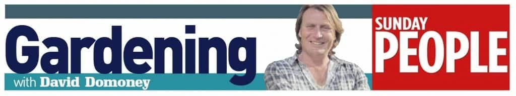 david domoney gardening columnist sunday-people-banner
