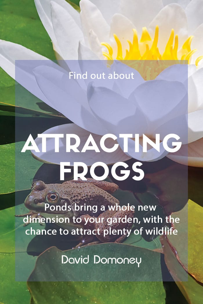 Attracting frogs to pond