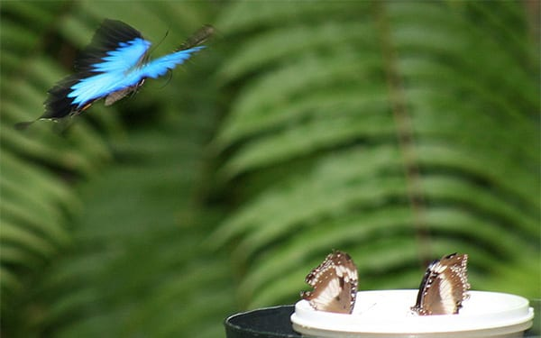 Butterfly-feeder-no-credit