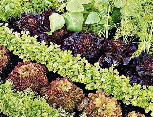 Grow your own veg with my planting calendar