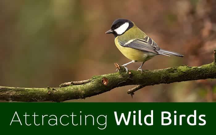 attracting-wild-birds