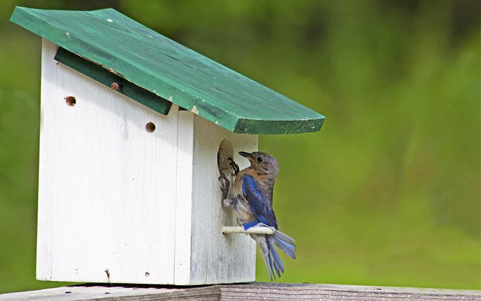 bird-box-with-bluetit