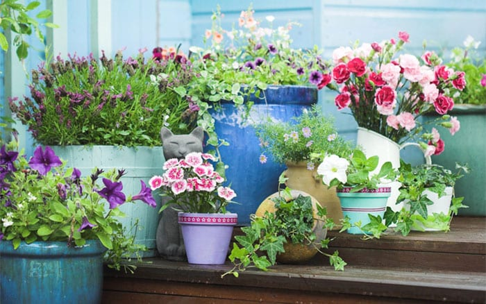 Planting Container Gardens container-garden-outside-blue-shed-with-flowers-and-