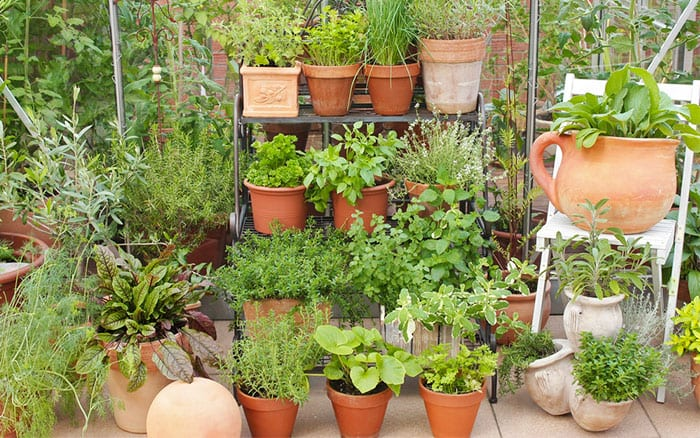 A quick guide to garden pots planters and containers for Balcony herb garden designs containers