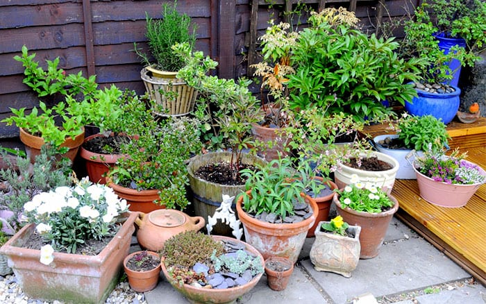 container-garden-with-different-plant-pots-terracotta-and-stone