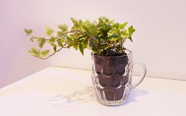 Container Gardening How To Plant Up Unusual Objects