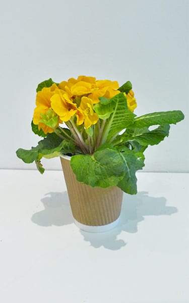 Container Gardening How To Plant Up, What Is The Usual Meaning Of Term Bedding Plant