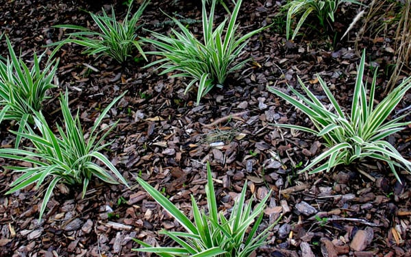 A quick guide to bark and wood chippings david domoney for Blue slate garden designs