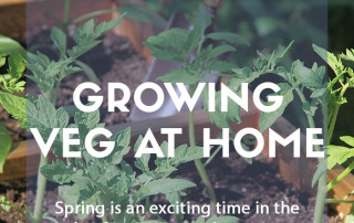 Growing vegetables at home part 1