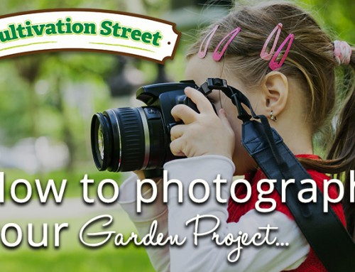 Cultivation Street: Guide To Photographing Your Entry