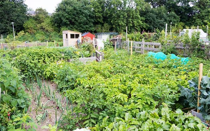 allotment-veg-garden-plot