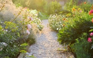 How to plant a herbaceous perennial border