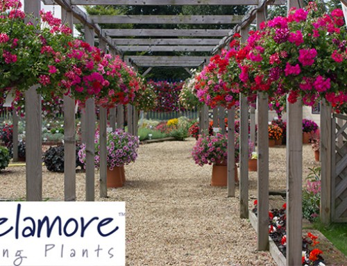 Cultivation Street – Delamore plug plants giveaway and care