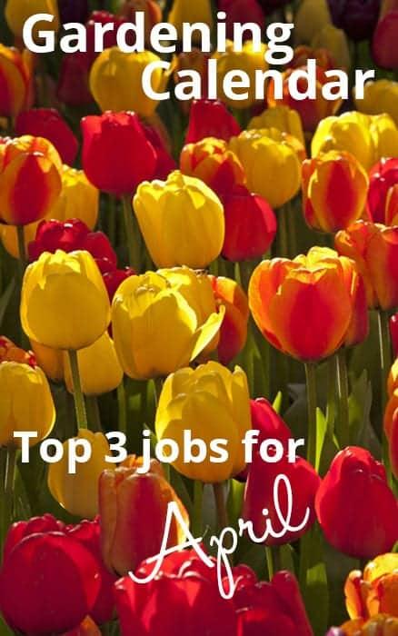 gardening-calendar-spring-gardening-jobs-for-april