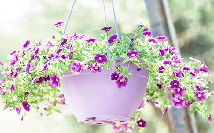 hanging-basket-plastic-with-petunias