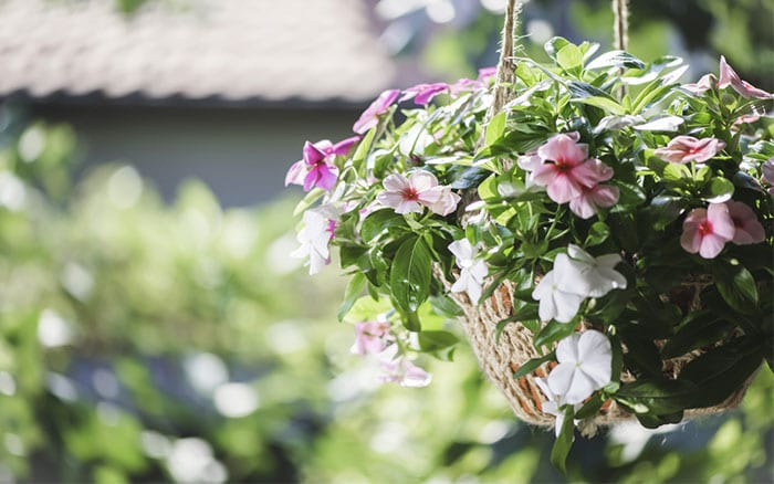 hanging-basket-with-flowers-how-to-plant-a-hanging-basket