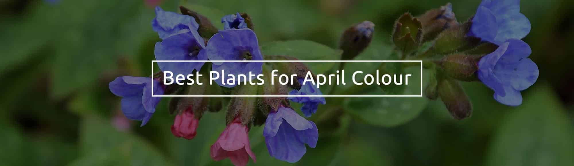 best January flowering plants