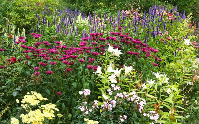 how to plant a herbaceous perennial border  david domoney, Beautiful flower