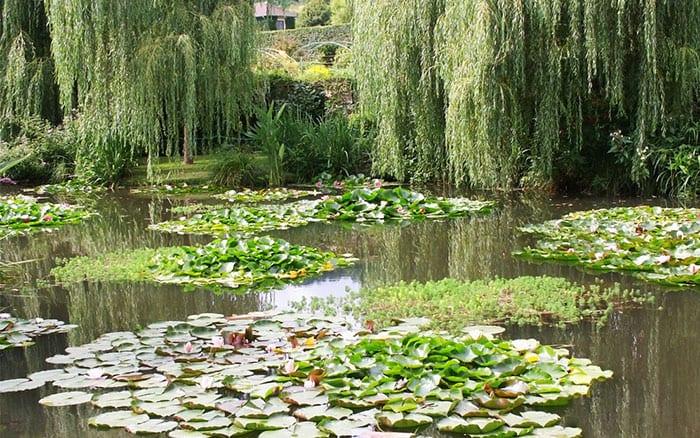 The lily pond. David Hughes/Shutterstock.com