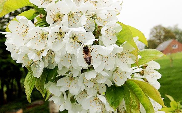 bees David Domoney