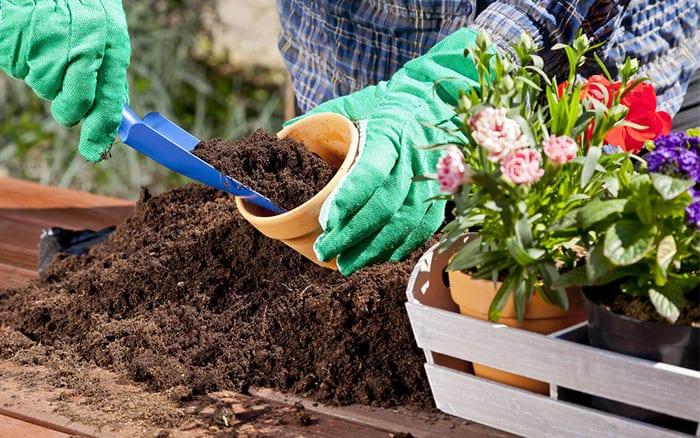 pot-up-plants-into-containers-terracotta-plant-pots