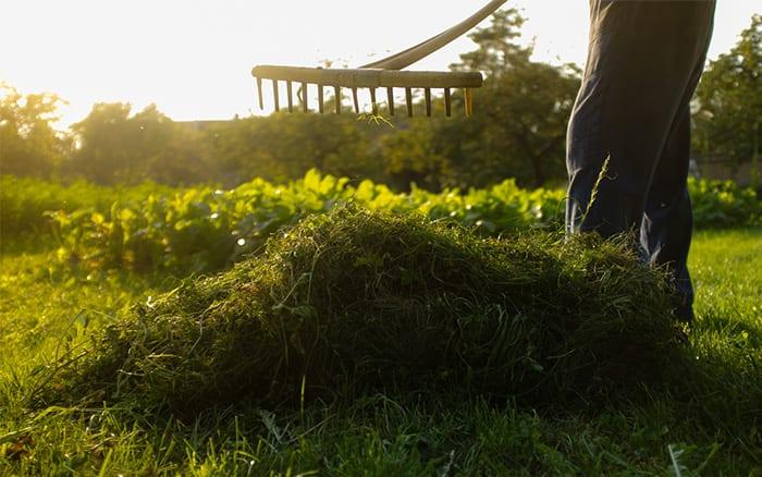 rake-garden-lawn-grass to remove moss