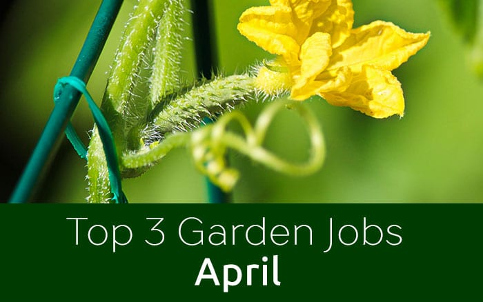 Gardening calendar the 3 must do gardening jobs for april for Gardening jobs for april