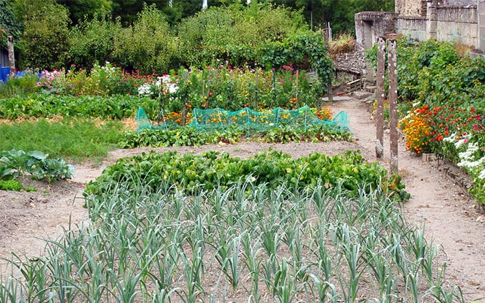 Allotment britain the home of grow your own david domoney - Profitable crops small plots ...
