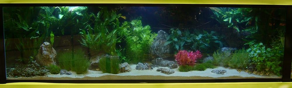 David Domoney Chelsea Flower Show Underwater Piranha garden