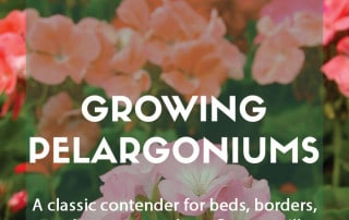 Guide to growing pelargoniums