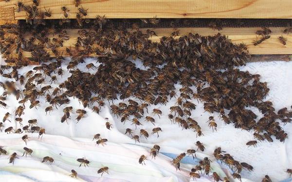 David Domoney beekeeping