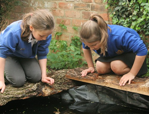 Cultivation Street – St Peter's school garden pond by the students