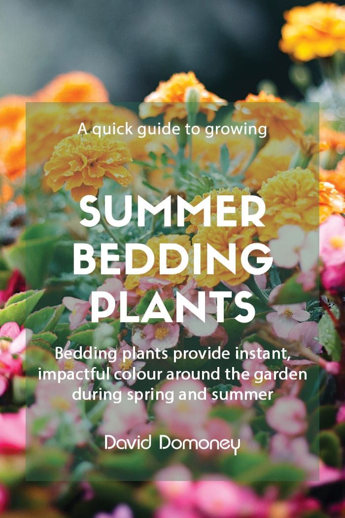 A guide to summer bedding plants
