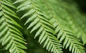 fern-fronds-plants-for-shade