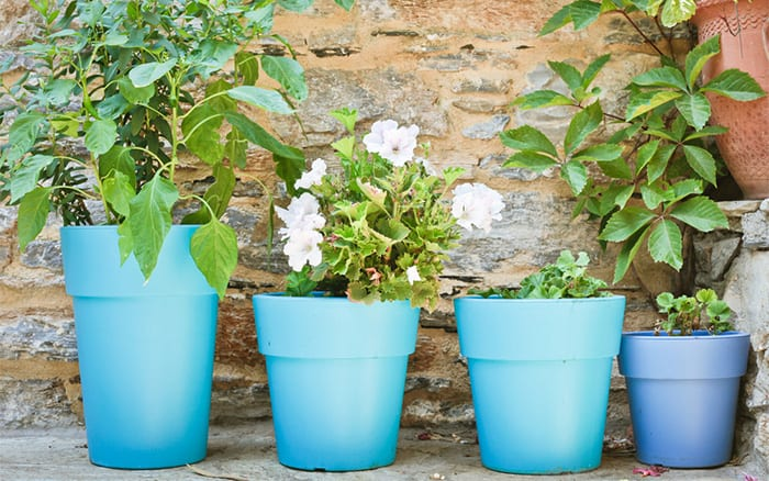 line-of-blue-pots-and-plants
