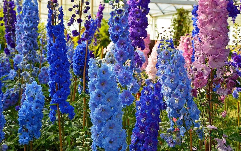 David Domoney's top 7 June plants