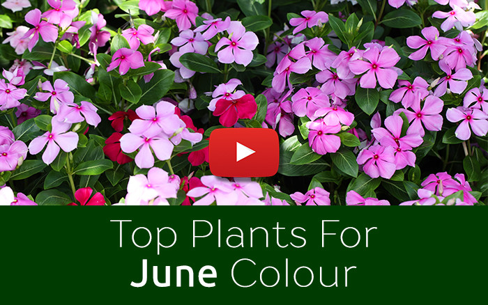 David Domoney's top 7 June plants