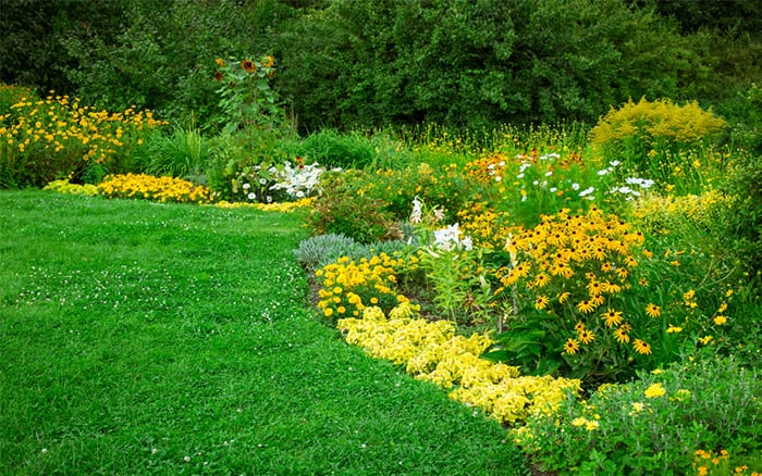 flower-beds-yellow-colourscheme