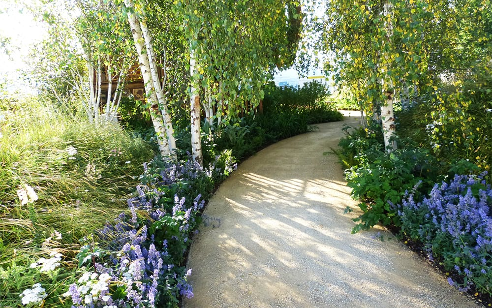 David Domoney Quiet Mark Treehouse and Garden by John Lewis 2014 RHS Hampton Court palace Flower Show woodland plants silver birch trees