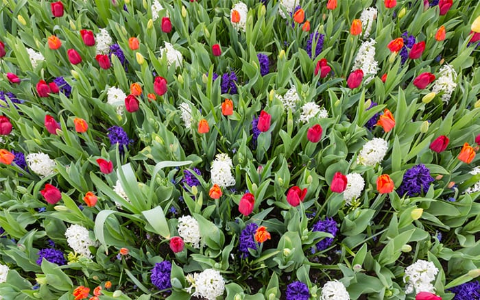 spring-bulbs-display