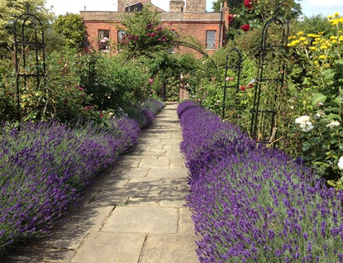 Competition: Win tickets to visit Capel Manor Gardens in Enfield