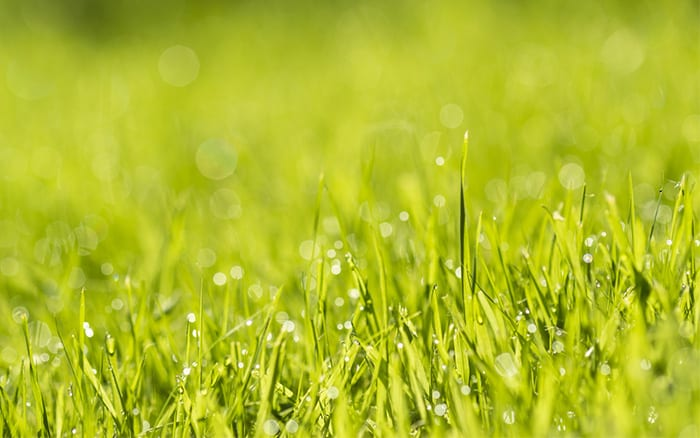 green-lawn-watered-and-fertilised how to make your grass greener