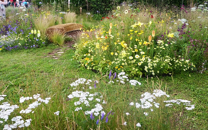 Jordans wildlife garden meadow-garden style plants at RHS Hampton Court Palace Flower Show 2014