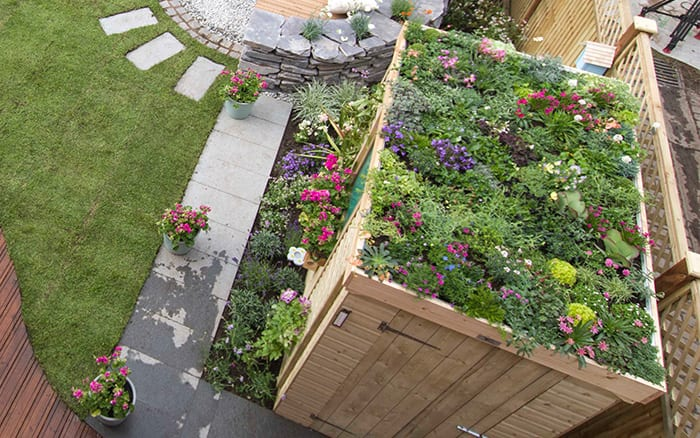 Love Your Garden Episode 4 Five Things We Learned And How