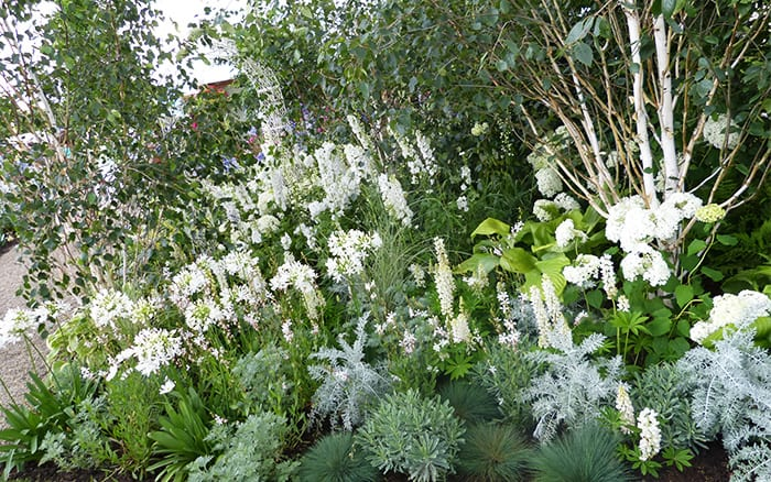 White Garden Rhs 50 Years In Bloom At Hampton Court Palace Flower Show 2017