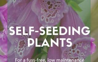 self seeders cottage garden