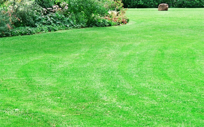 garden-lawn-how-to-care-for-grass